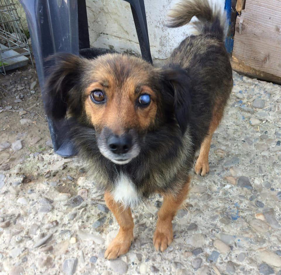 Sally Haben Wir Ganz Zufallig Zwischen Autos Auf Einem Parkplatz In Suceava Rumanien Entdeckt Auf Dem Die Kleine Hundin Ein W Hunde Kleine Hunde Hunde In Not