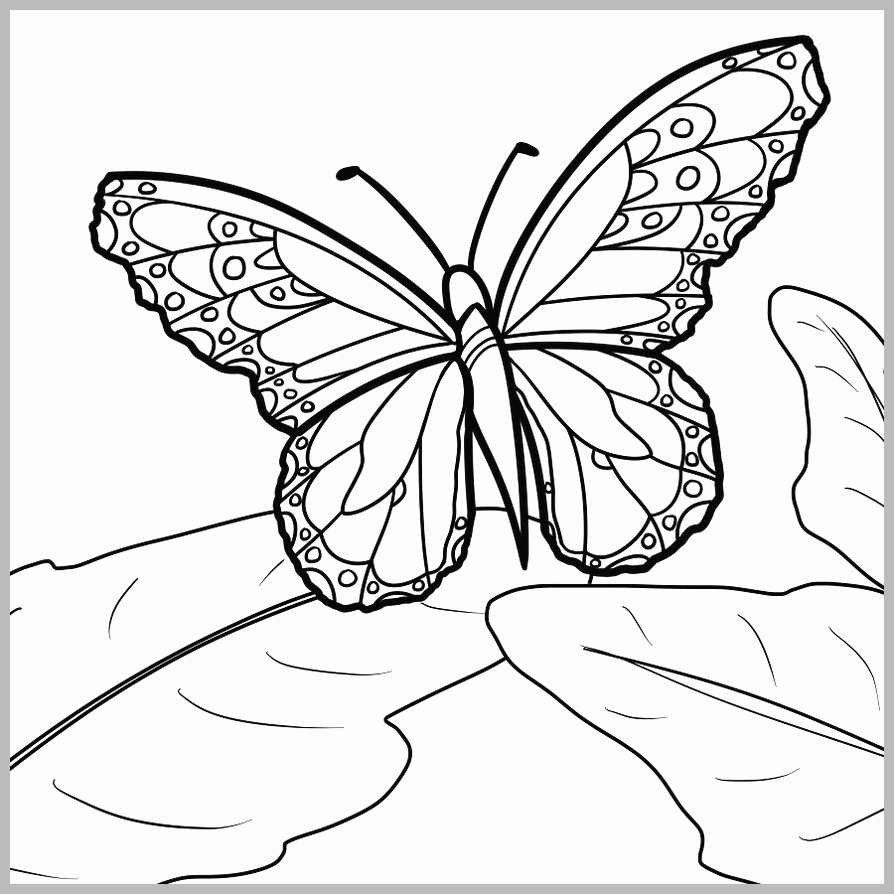 27+ Exclusive Photo of Free Butterfly Coloring Pages ...