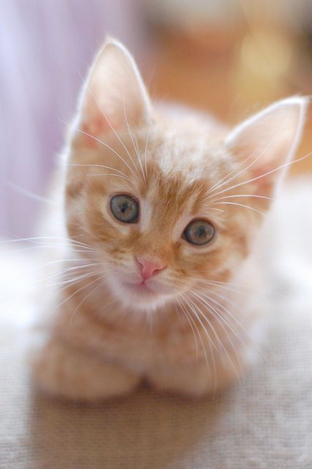 Jo Cats And Kittens Cats And Kittens For Sale In Singapore With