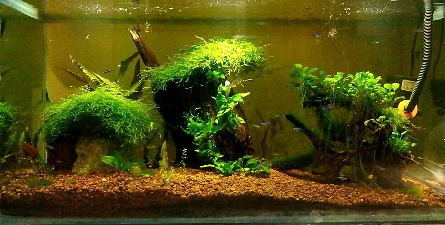 Using Driftwood And Live Plants In The Freshwater Tank Live Plants Fresh Water Driftwood