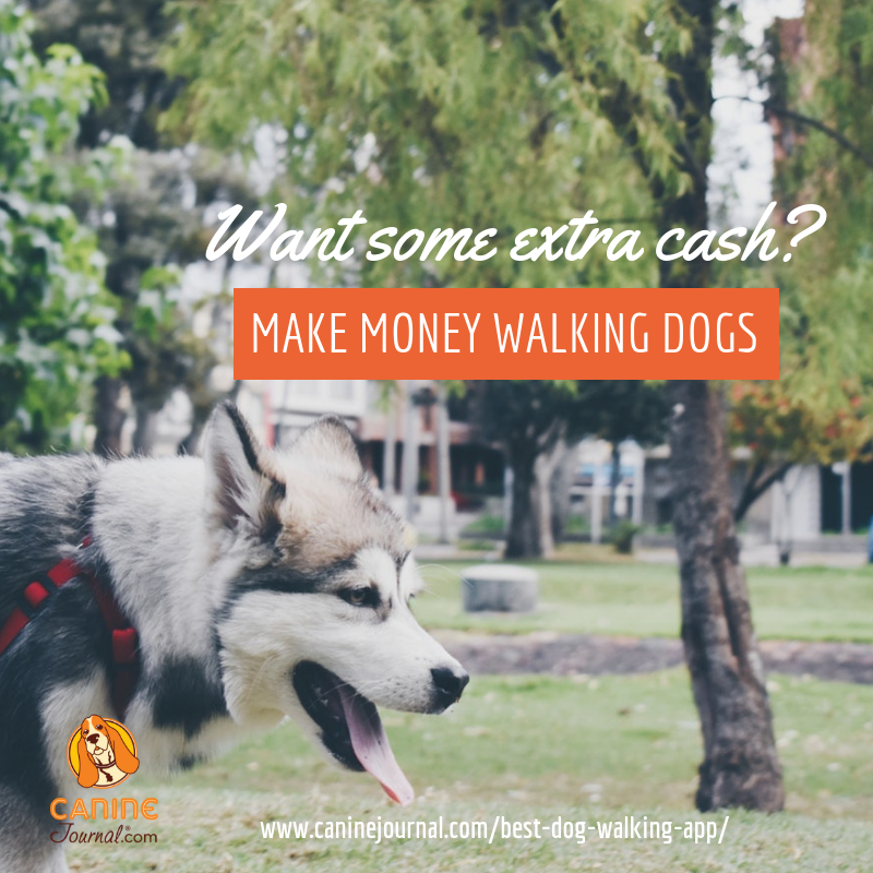 Best Dog Walking App Rover Vs Wag Vs Barkly Pets Caninejournal Com Dog Walking Dog Walking Business Big Dog Care