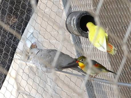 There is an interwoven rope mesh birds cage with three birds in it ...