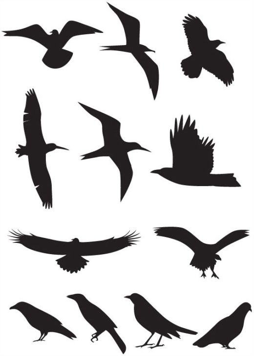 tattoo of one of these lines on your wrist simply wonderful rh pinterest co uk vector birds illustration vector birds illustration