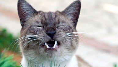 Katze Putzt Mich