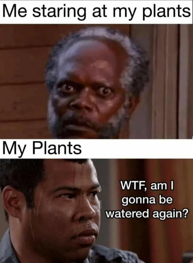 reddit the front page of the in 2020 Plant