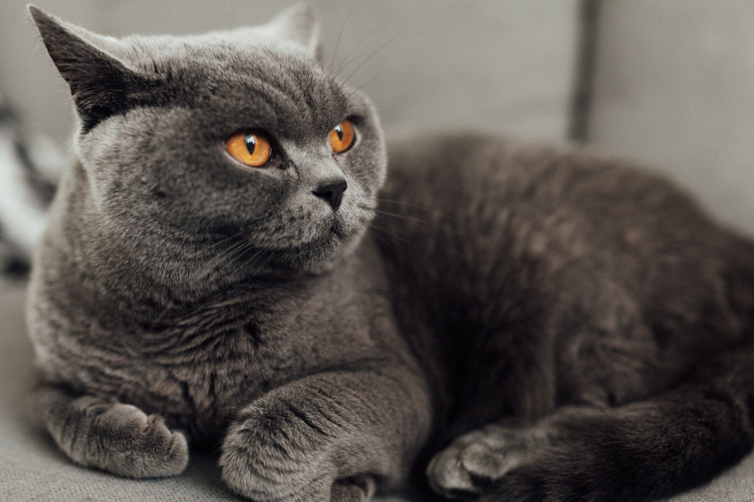 Top 10 Cutest Cat Breeds Know Them Now Cat Breeds Cute Cat