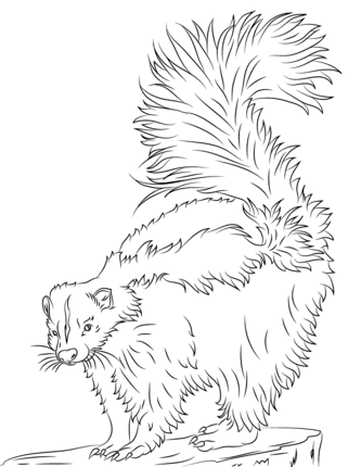 Cute Skunk Coloring Page Supercoloring Com Zoo Animal Coloring Pages Coloring Pages Animal Coloring Pages