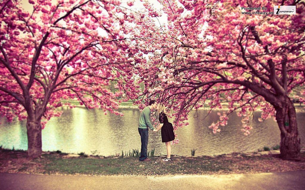 Sakura Tree Flower Spring Pond Couple Kiss Love Nature Tree Photography Spring Flowers Wallpaper Sakura Tree