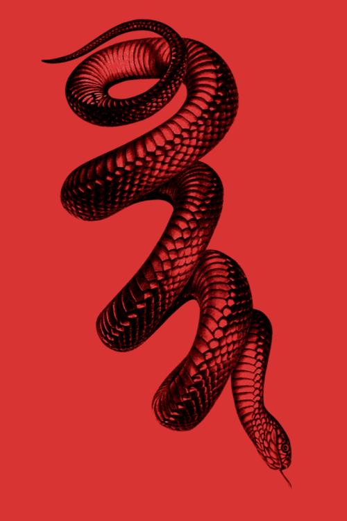 Pin By Vanessa H On Tattoos Snakes Snake Art Diy Tattoo Art Wallpaper