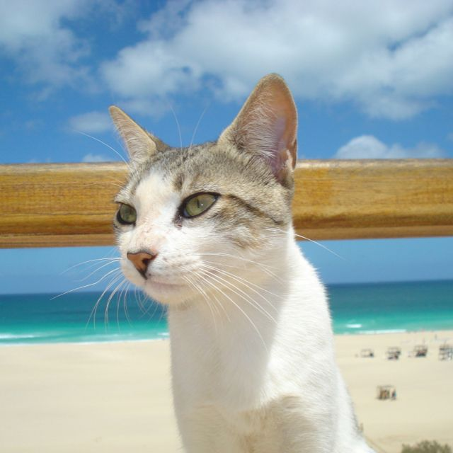 Cat On The Beach Cats Kittens Cats Cute Cats Kittens