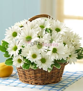 more daisy
