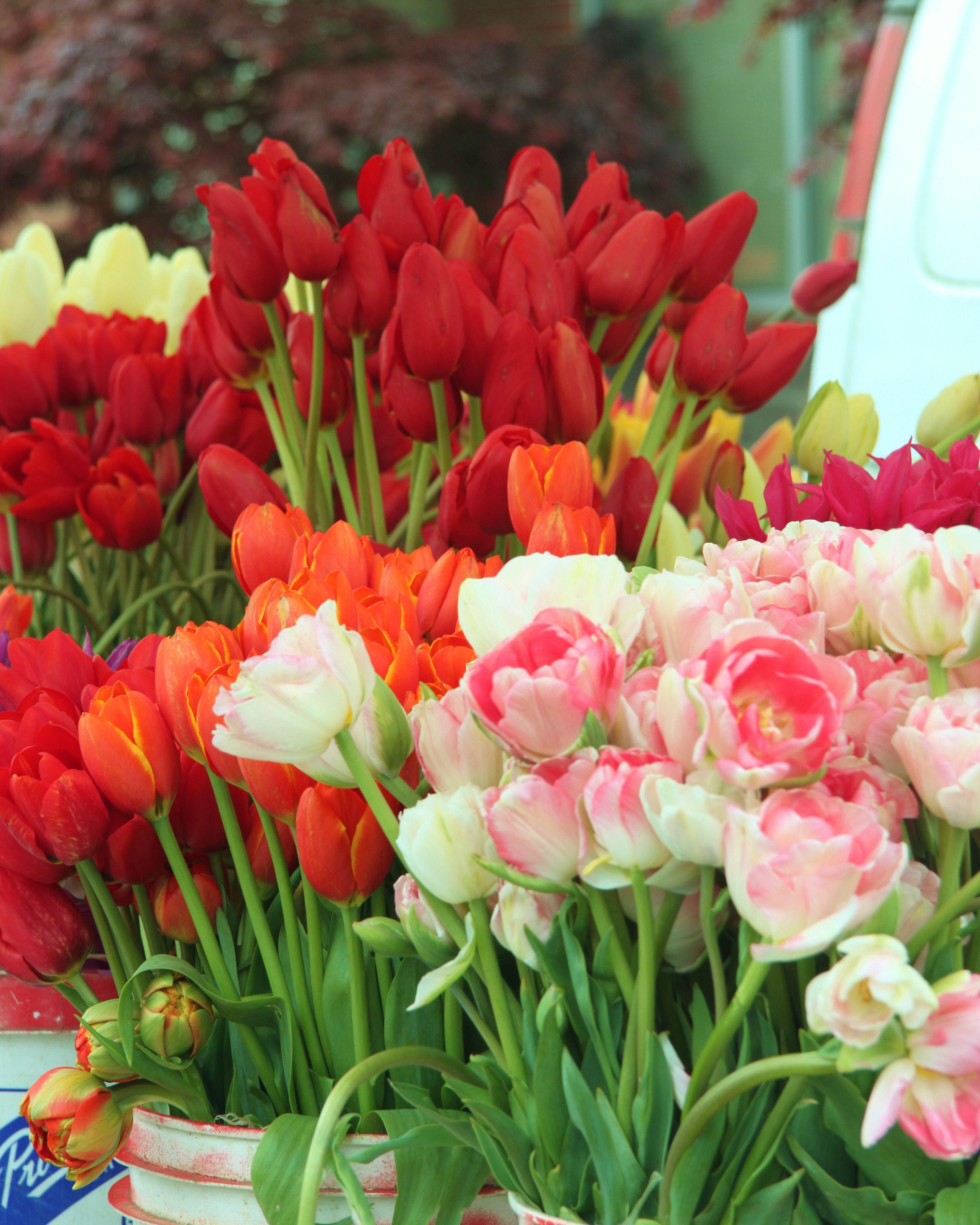 Puyallup WA Farmers Market Seattle Pinterest Puyallup wa and