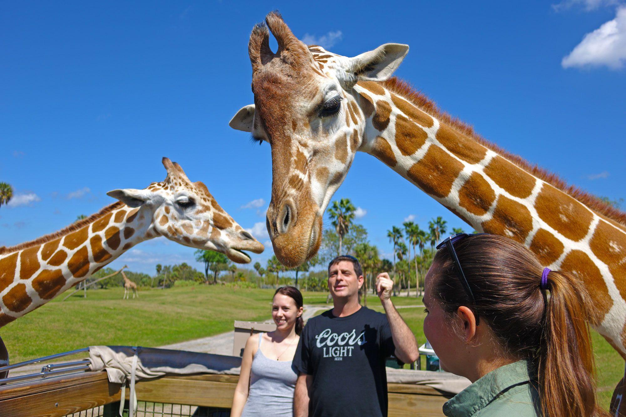 f18d25d3e43b16b194fd05370bcd7299 - Is The Safari Included In Busch Gardens