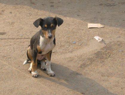 Street Dog In Kolkata Street Dogs Dogs Animals