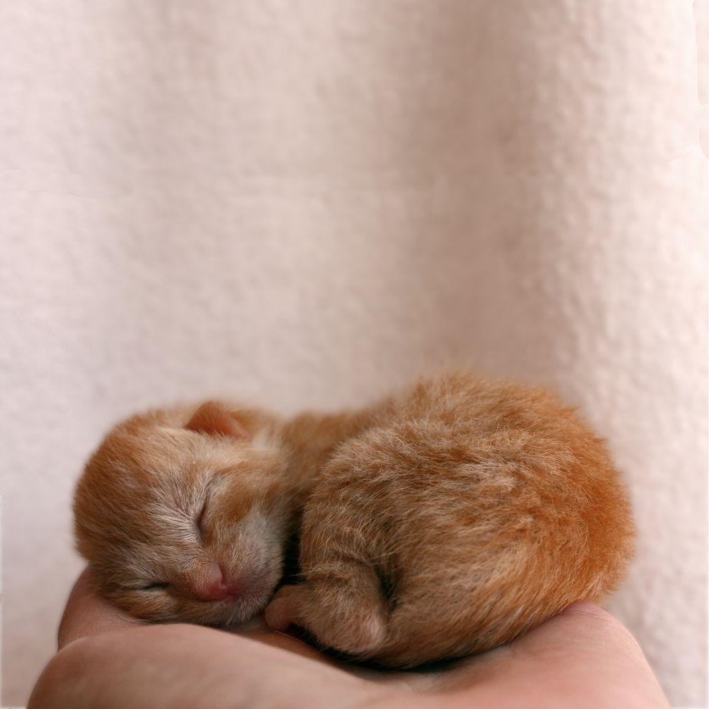 Newborn Newborn Kittens Kittens Kittens Cutest