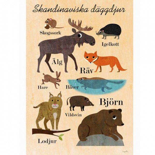 Scandinavian Animals Animal Posters Swedish Language Scandinavian