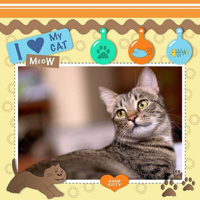 Pet Cat Scrapbook Layout Pet Scrapbook Pages Pinterest