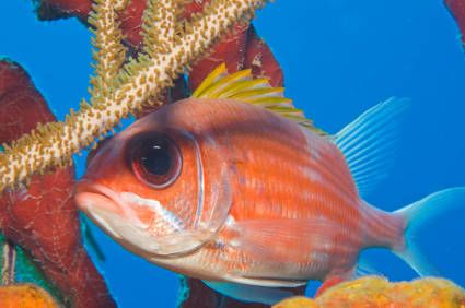 Reef Fish Identification Guide - 20 Common Species of Florida and the Caribbean