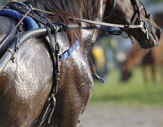 Why Does Horse Sweat Appear Foamy?