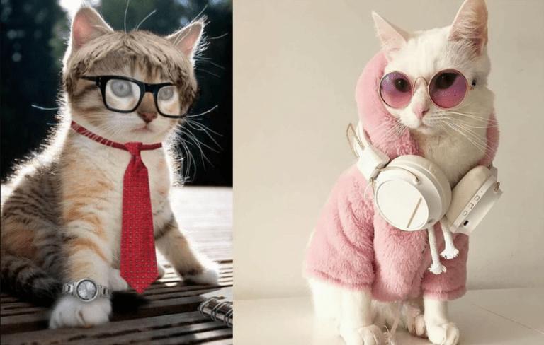 Pets Dp Happy Cat Cute Animals Cat Breeds