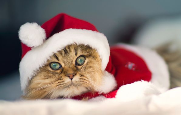 A kitten in a Christmas outfit. | Pets At Christmastime | Pinterest ...