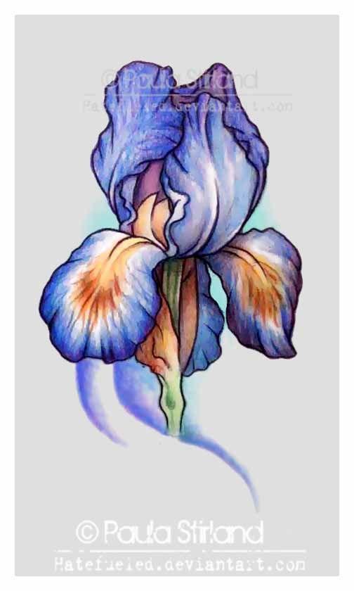 b2f38df5f14dc 17 Iris Tattoo Designs And Ideas | Tattoo | Iris tattoo, Flower ...