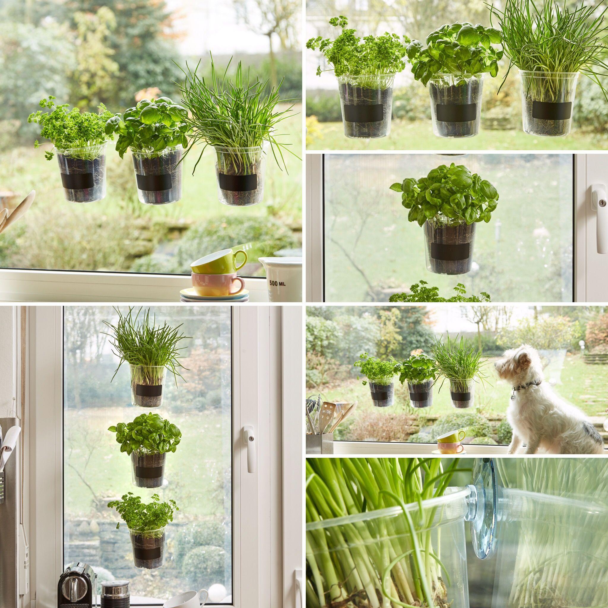 Das Kräutertopf Trio für das Küchenfenster bei MY LITTLE WINDOWS ...