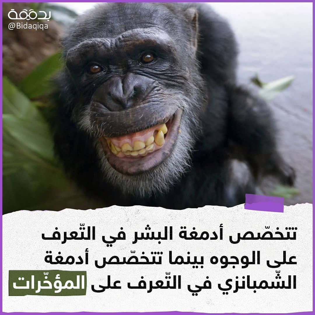 سيلفي ومؤخرتي خلفي بدي شوووف تفااعل يا حلوين فولو للصفحة Bidaqiqa Bidaqiqa Bidaqiqa لو جاي من الاكسبلور شرفت الصفحة Monkey Gorilla Animals
