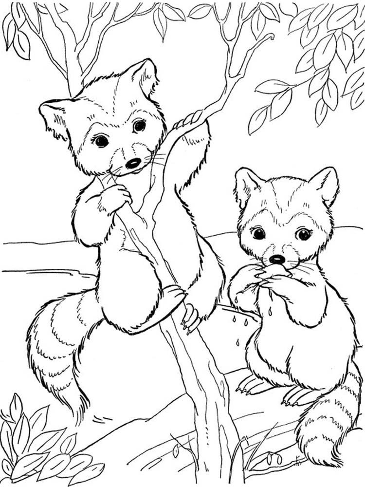 Realistic Raccoon Coloring Page Raccoons Are Small Mammals That Live In North America Central Am Deer Coloring Pages Animal Coloring Books Zoo Coloring Pages