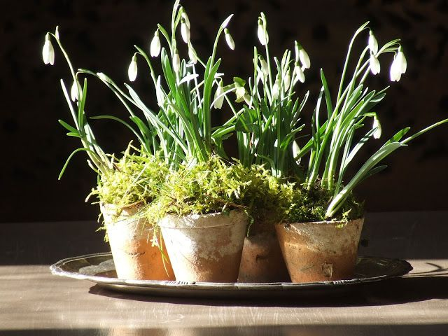 Snowdrops Myfrenchcountryhome Blogspot Com My French Country Home French Country House Snow Drops Flowers