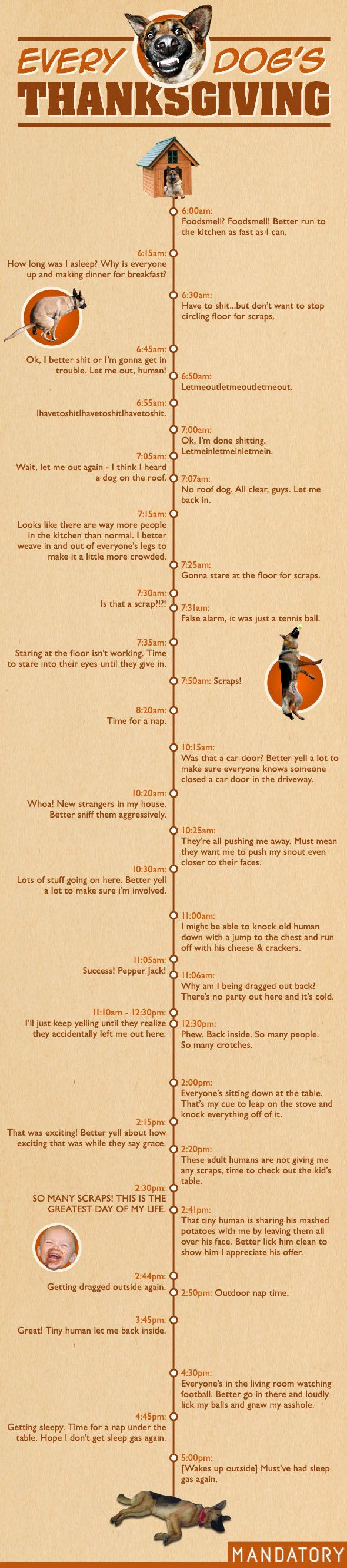 Every Dog's Thanksgiving A Timeline Dog thanksgiving