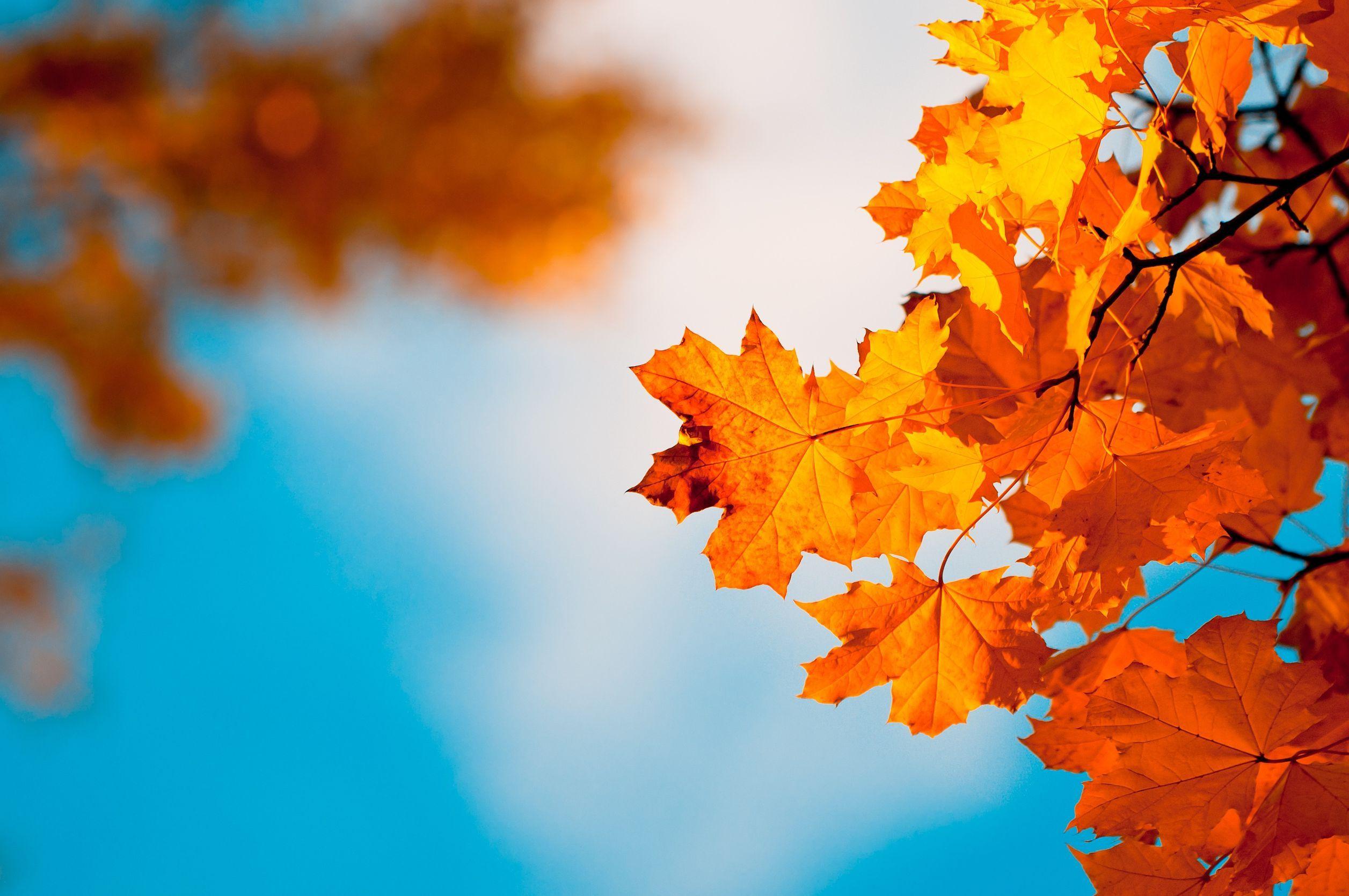 #autumn #leaves #sky #september #october #november #bye # ...