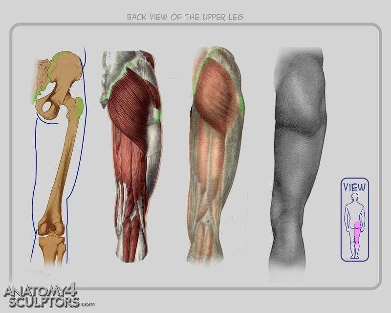 Moderno Artistas Que Dibujan La Anatomía Humana Ideas - Anatomía de ...