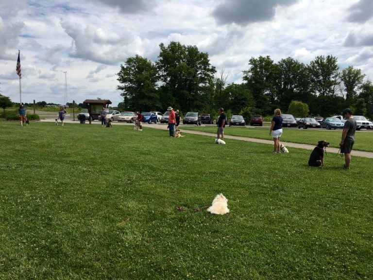 Dog Training Class Plain City, OH Dog training classes
