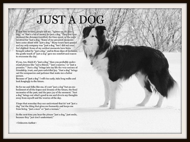 just a dog poem