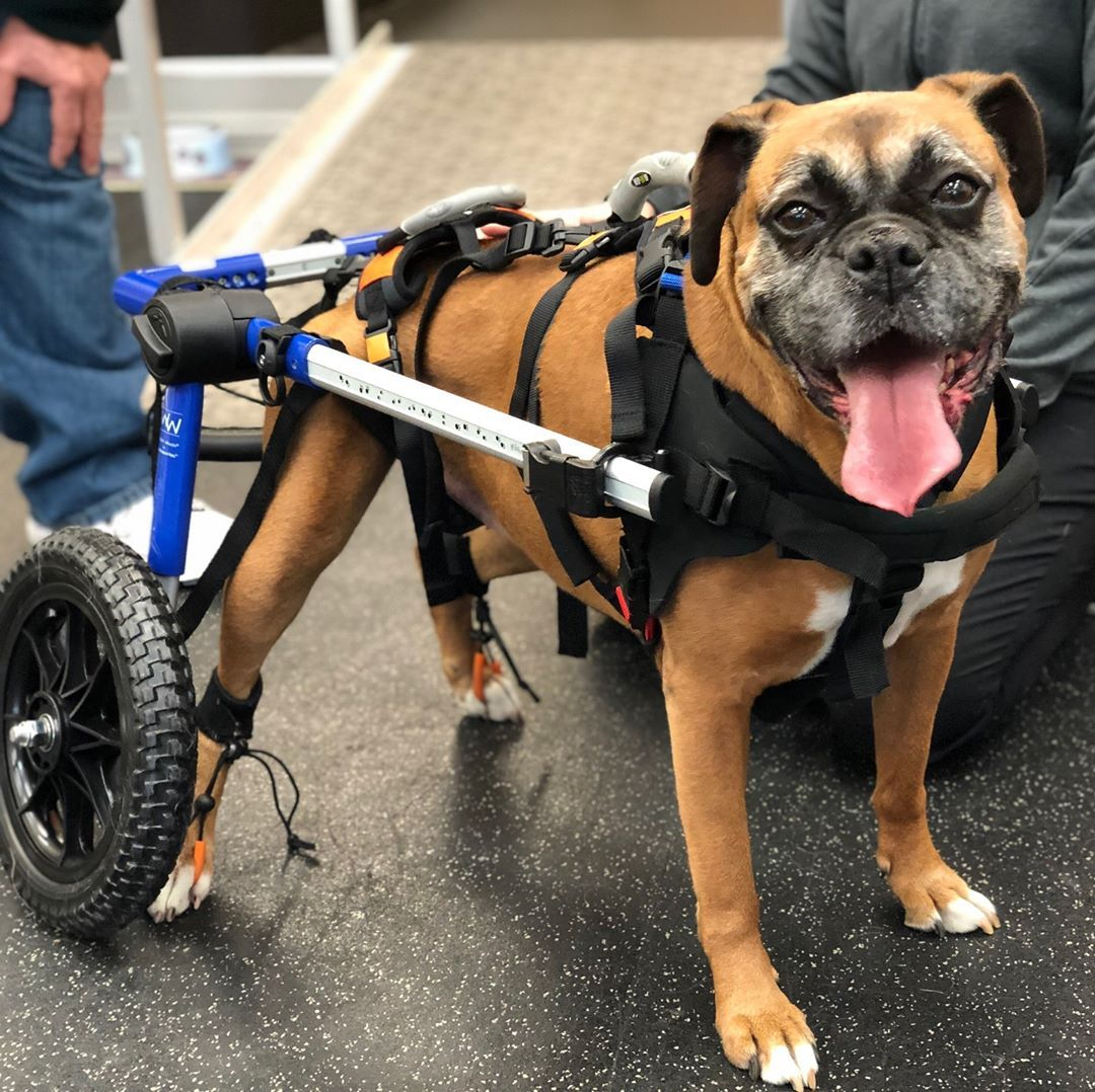Walkin Wheels Medium Dog Wheelchair Dog Wheelchair Medium Dogs
