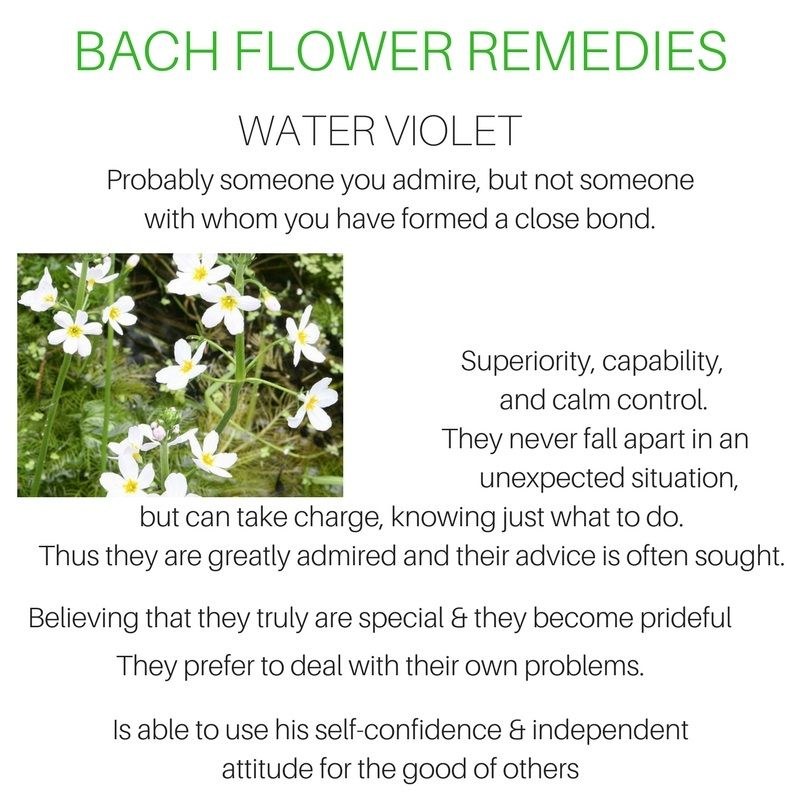 Water Violet In 2020 Bach Flower Remedies Flower Remedy Bach Flowers