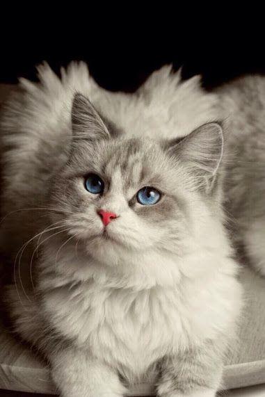 ANIMALS - Topluluk - Google+