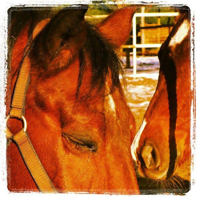 #horse #beauty #love #puppy #cucciolo #nose #eyes #lacrima #brown #sun #ride #passion #mother #daughter #novellaorchidea #novella #orchidea #raccontierotici #racconti #ebook