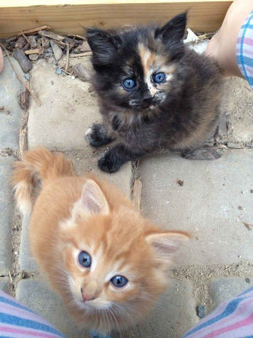 These kittens who don't know anything about ageism: