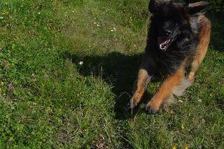 Gårdstunet Hundepensjonat: Varme dager på tunet