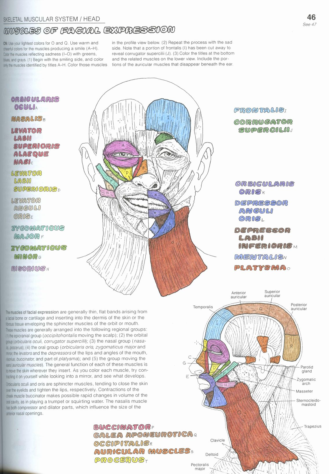 Best Anatomy Coloring Book Lovely Coloring Fantastic The Anatomy Coloring Book 4th Edition Anatomy Coloring Book Coloring Books Words Coloring Book