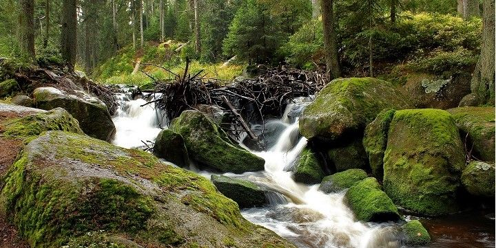 Bohemian Forest, Bohemia, Czechia, Europe