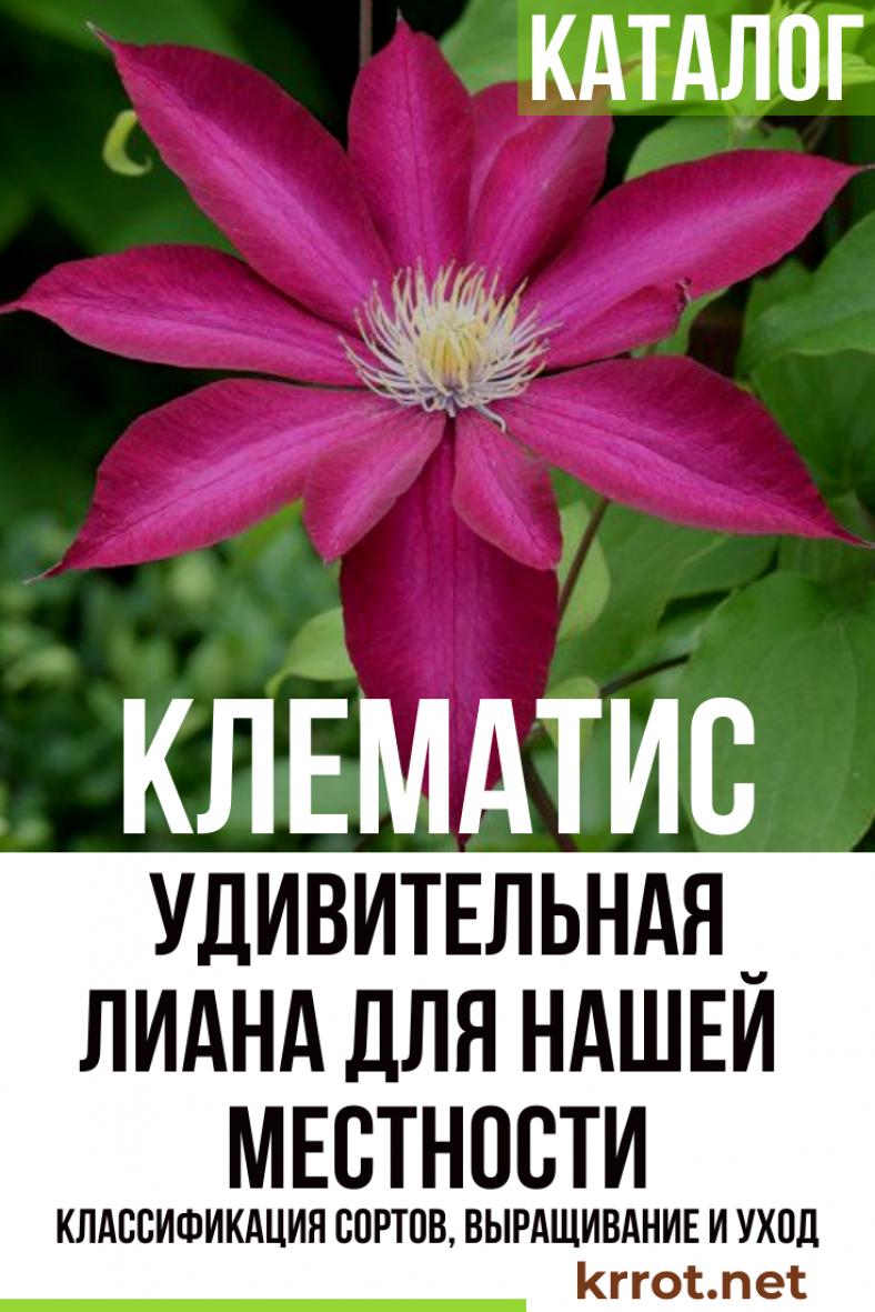 клематис гелиос выращивание из семян фото отзывы