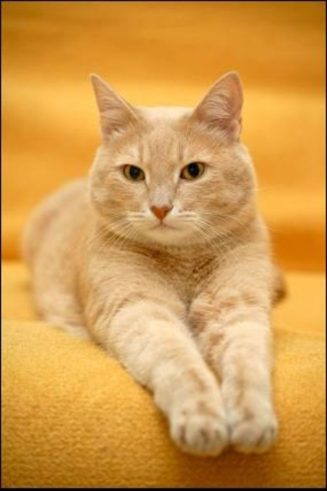 And Pose Orange Tabby Cats Cats Ginger Cats