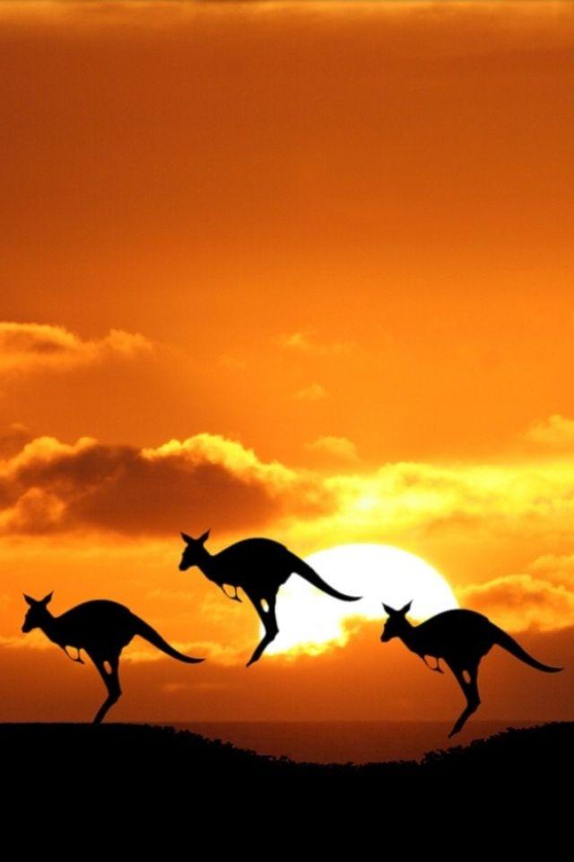 Australia #Descubre #Nescafé