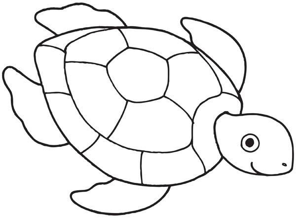 image regarding Turtle Pattern Printable identify Sea Turtle Drawing Coloring Printable Web pages -