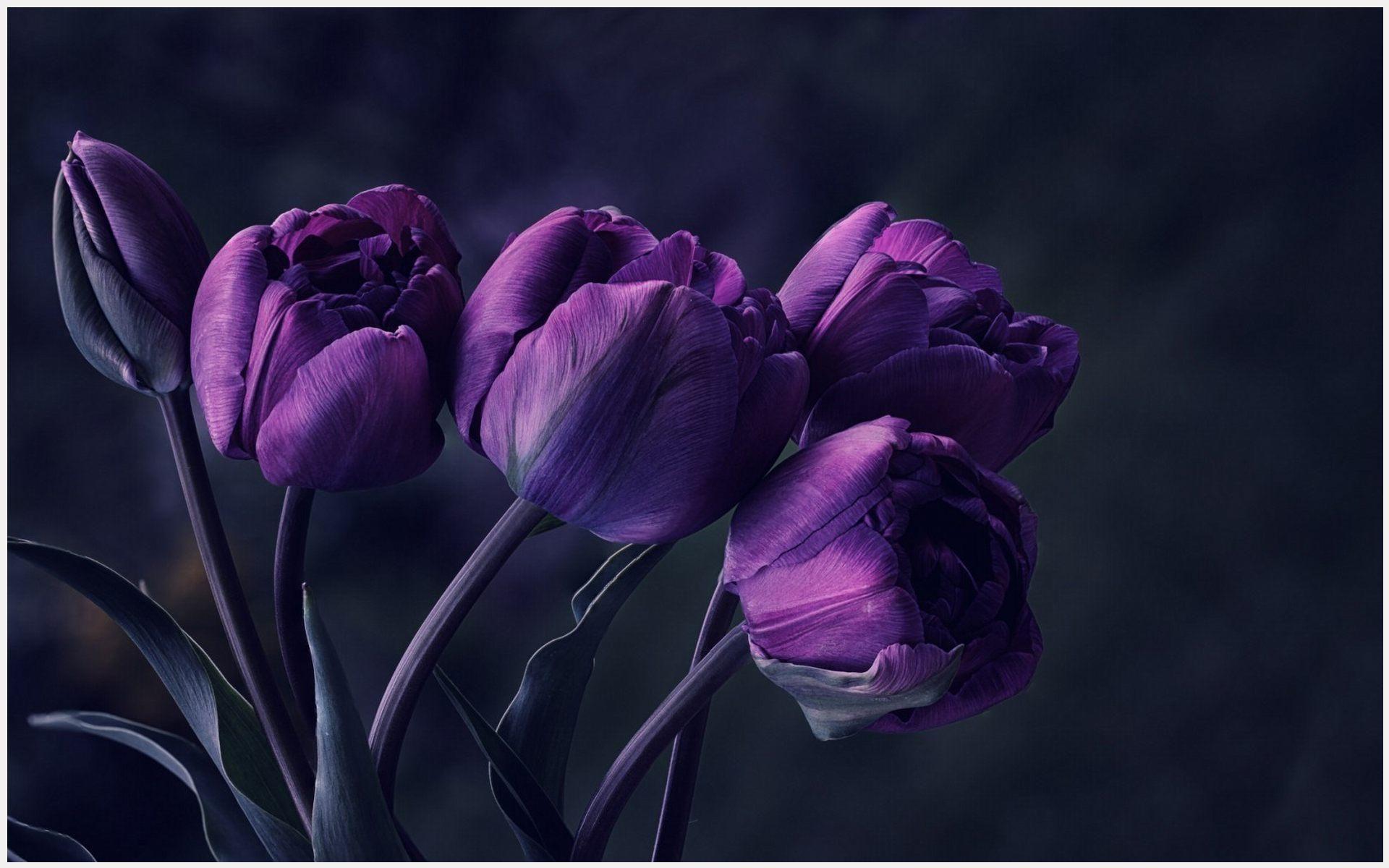 Dark purple tulip flower wallpaper decocurbs amazing funny dark purple tulip flower wallpaper decocurbs amazing funny wallpaper dark purple tulip flower wallpaper decocurbs amazing funny wallpaper mightylinksfo