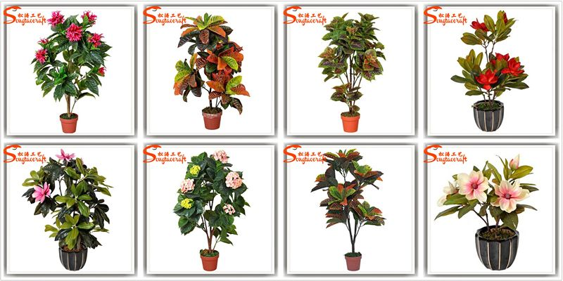Indoor Plants Flowers And Plants Plant Flower Names Plant ... on chinese indoor flower plants, 5 easy indoor plants, top 10 indoor plants, best indoor plants, name of orchids, low maintenance indoor plants, common names of indoor plants, low light indoor plants, large indoor plants, blooming indoor plants,