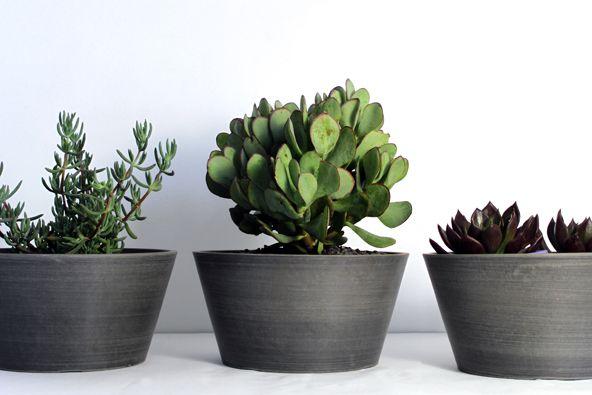 Eco Squat Pots Garden Life Encontrado En Gardenlife Com 400 x 300